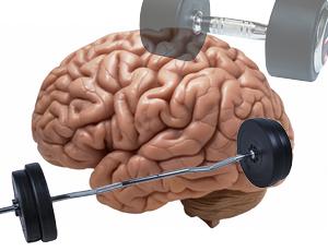 pamięć mięśniowa